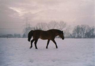 Exteriér koně Huculští koně se vyskytují v několika kmenech ...