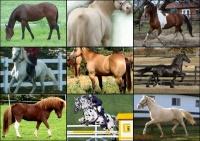 Srst a barvy koní