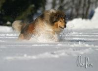 fotografování - foto: Pes Jíra