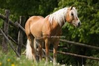 kůň - foto Zuzana Landnerová - FotoZuZa