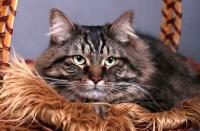 kočka - foto: Zuzana Landnerová - FotoZuZa