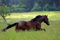 koně - foto: Zuzana Landnerová - FotoZuZa