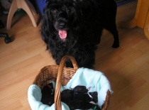 srpen 2015 - Connie s týdenními miminky