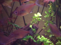 rybyčky02