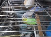 Čau Chicku! Mlmsc!